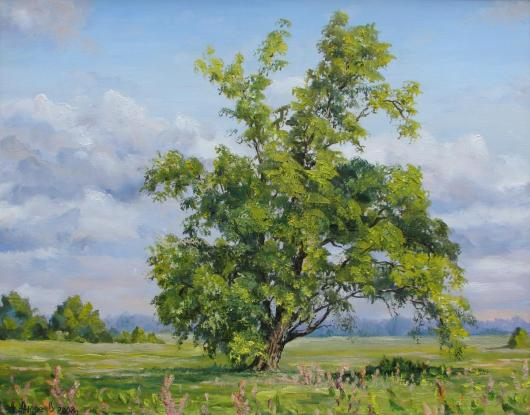 Summer,  Kanev, landscape