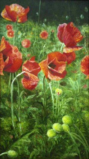 Poppies, flowers, landscape